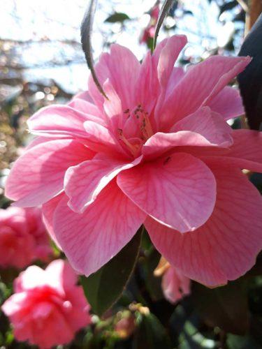 Gardens in Cornwall | Budock Vean Hotel