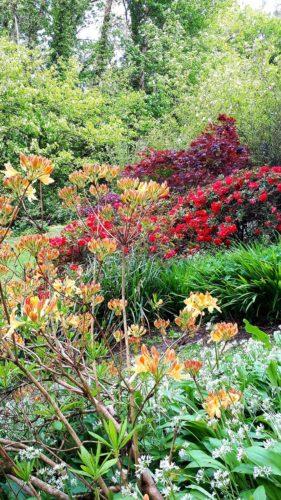 Hotel Gardens in Cornwall | Budock Vean Hotel