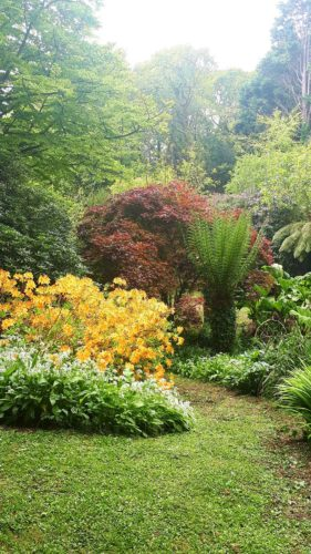 Hotel Gardens Cornwall | Budock Vean Hotel