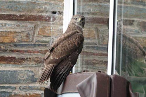 Wildlife in Cornwall | Budock Vean Hotel