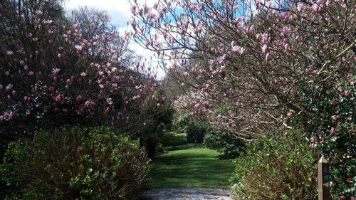 Hotel Gardens | Budock Vean Hotel | Cornwall