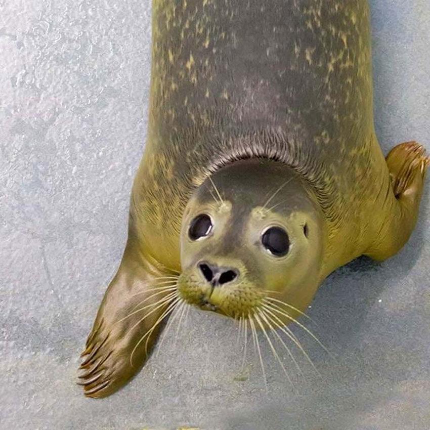 cornish-seal-santuary