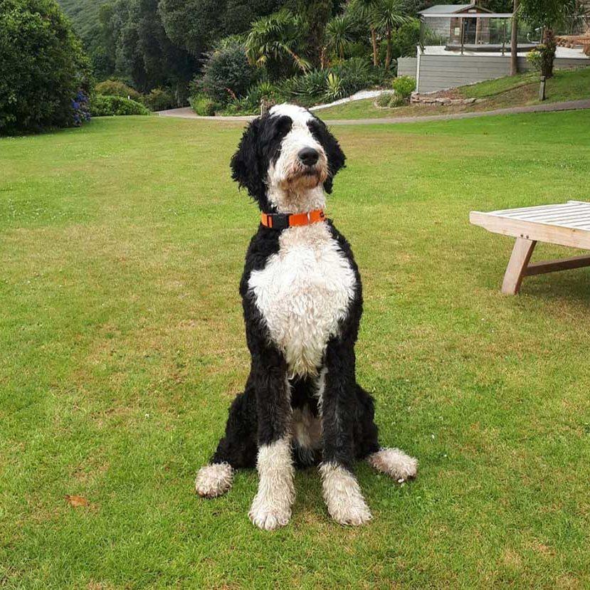 dog-friendly-accomodation