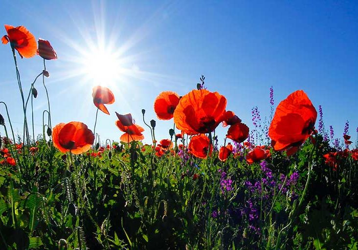 Remembrance Sunday | Budock Vean Hotel | Cornwall